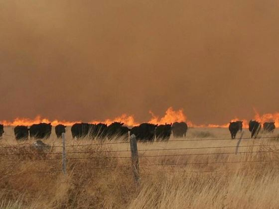 Panhandle Fire