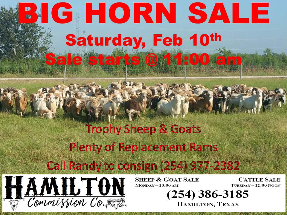 BIG HORN SALE AD